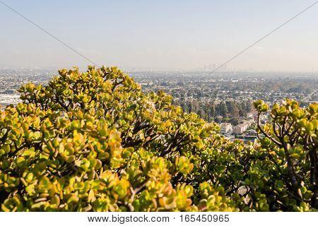 Los Angeles Cityscape W8A0354