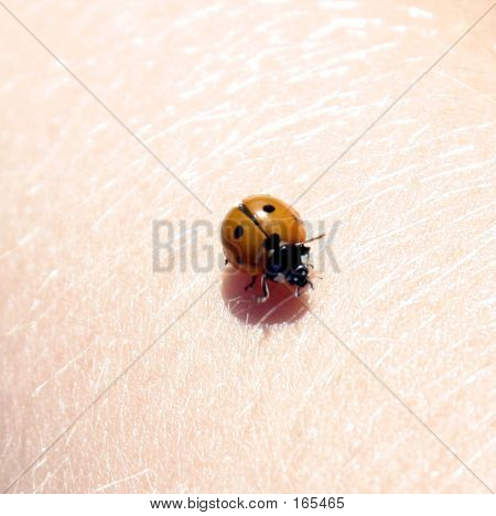 Bug On Arm