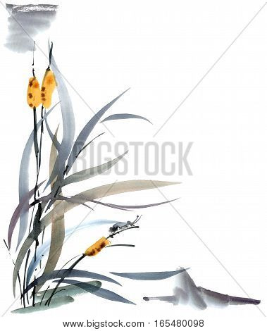 Watercolor and ink illustration of grass with cicada. Sumi-e u-sin painting. Oriental traditional style.