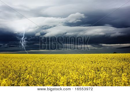 Lightning bolt strikes a rapeseed field on a summer day