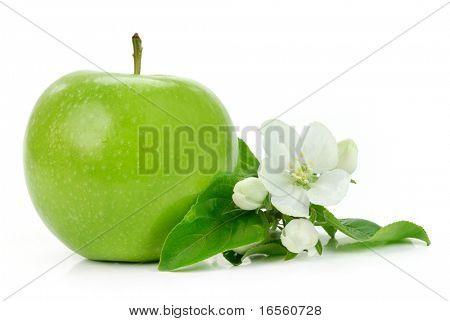 grüner Apfel mit Blüte, isoliert auf weiss