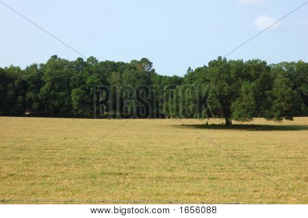 TREE IN MEADOW IN URBAN CENTRAL