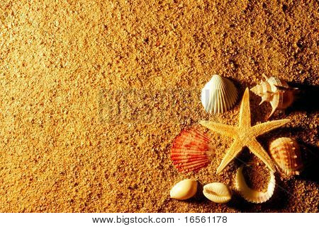 Sand and seashells