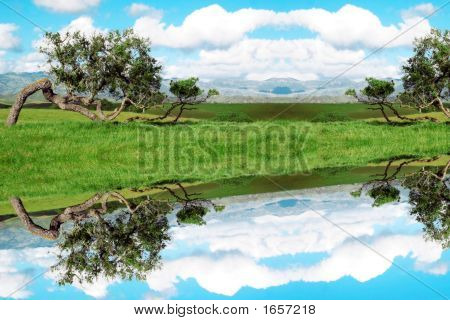 Surreal Reflections