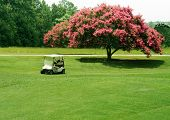 picture of crepe myrtle  - golf cart in front of a crepe myrtle tree - JPG
