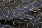 pic of chicken-wire  - Section of Chicken wire over black roofing paper - JPG