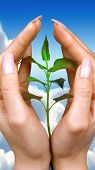 pic of seed bearing  - Hands holding a small plant on sky background - JPG