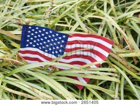 U.S. In The Jungle