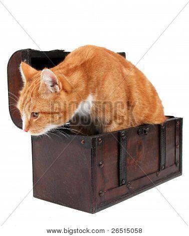 Tomcat In Chest