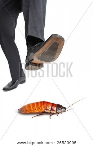 A giant foot about to step on a cockroach isolated on white background
