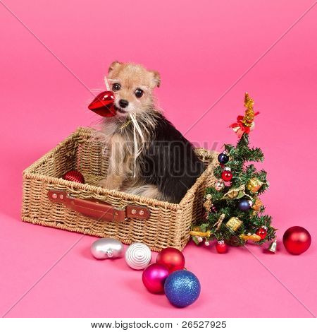 Christmas dog choosing balls to decorate New Year Tree, on pink background