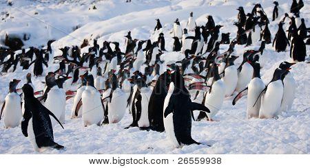 um grande grupo de pinguins, divertir-se nas montanhas nevadas da Antárctica