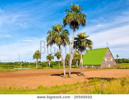 House for curing tobacco in the cuban region of Vuelta Abajo, a world famous tobacco growing area