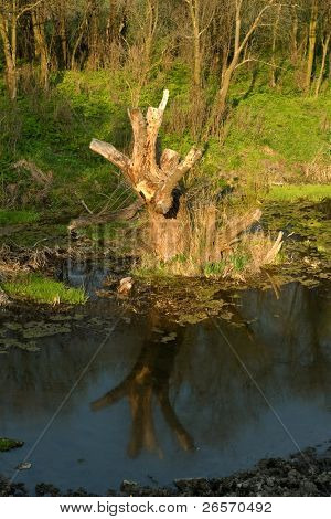 In troubled waters reflection of a dry dead-wood