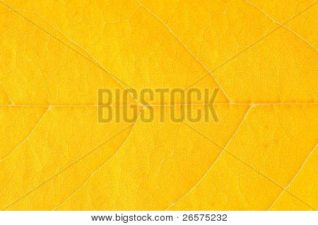 Texture of a yellow leaf as background