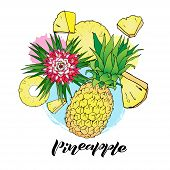 Vector Color Illustration Of Pineapple, Ananas Flower And Circles And Pieces On White Background. Te poster