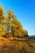 Autumn Landscape With Oak Trees. Big Autumn Oak And Green Grass On A Meadow Around poster