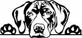 Animal Dog German Shorthaired Pointer 2.eps poster