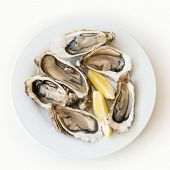 Fresh oysters with lemon. Raw fresh oysters on white round plate, image isolated, with soft focus. R poster