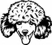 Animal Dog Poodle 7 Fixed.eps poster