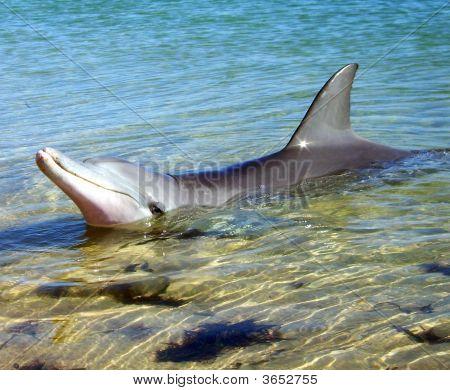 Dolphin Wild 2