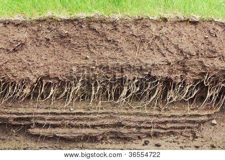 Sección transversal de la tierra con las raíces y las capas de suciedad