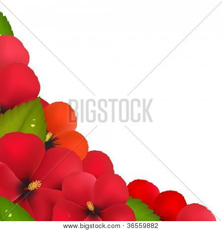 Red Hibiscus Flowers With Leaf Border, Isolated On White Background