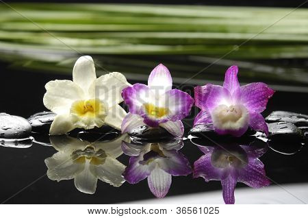 Three gorgeous orchid and palm leaf with therapy stones