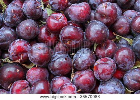 Fresh Okanagan Valley plums.