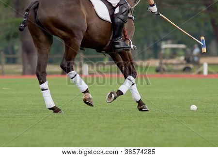 Polo Rider Aiming For The Ball