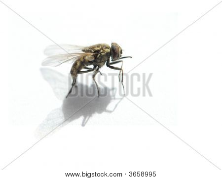 Fly Close-Up