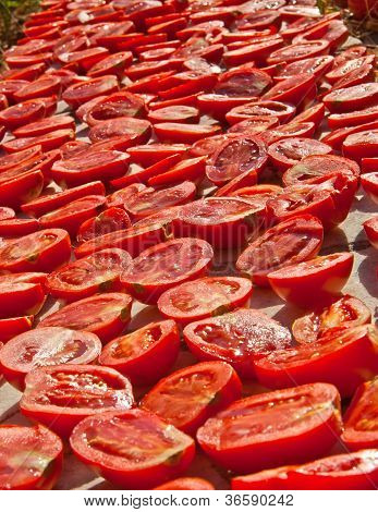 Fresh Organic Tomatoes Under Hot Sun To Dry