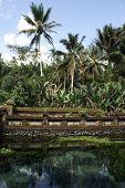 pic of hydrophytes  - Pond in Tirta Empul temple near Ubud bali - JPG