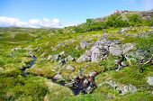 image of murmansk  - Landscape of the polar summer tundra - JPG