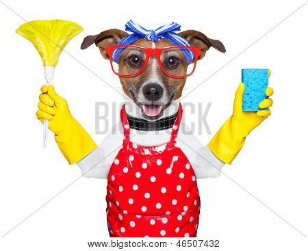 Housewife Dog