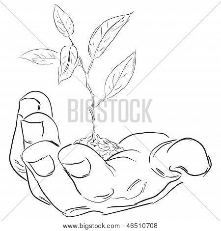 Mão com um ramo