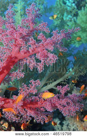 Colorful Soft Corals