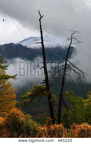 Deadwood, Clouds And Yellow Bushes. Altay