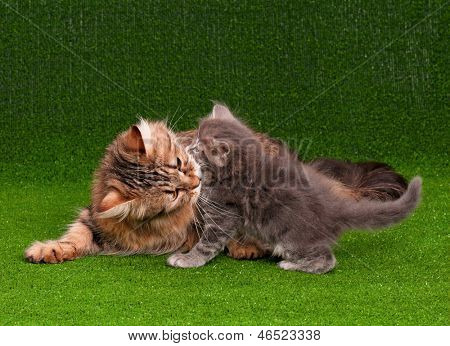 Cat grooming her kitten on artificial green grass