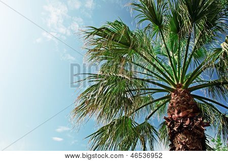 Palm On Background Of Blue Sky
