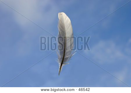 Feather Against Blue Sky