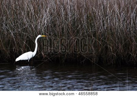 Bird in swamp land