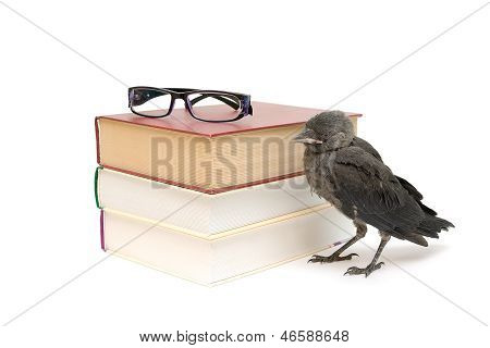 Bird And Books Isolated On A White Background. Horizontal Photo.
