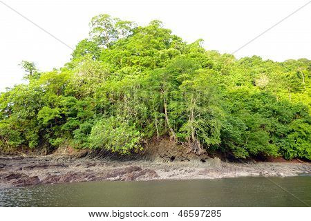 Tropical River Landscape In Panama
