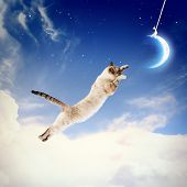 foto of goodnight  - Image of cat in jump catching moon - JPG