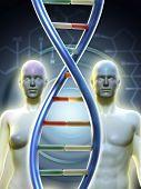 Постер, плакат: Мужские и женские человеческие фигуры связанные цепи ДНК Цифровой иллюстрации