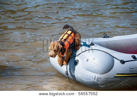 ULM, GERMANY - 22 JULY 2013: Funny rescue dog at traditional NABADA water carnival festival on 22nd July 2013 in Ulm, Germany