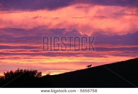 Countryside rural colourful sunset view of a horse on a hill