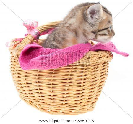 Gray Kitten In A Basket