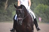 picture of fillies  - Beautiful sport horse portrait during dressage test in summer - JPG